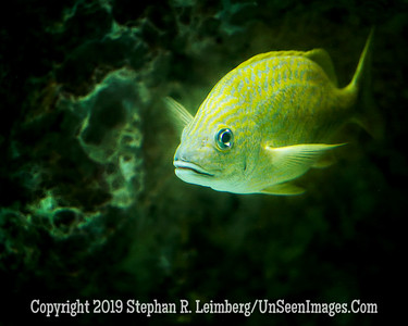Yellow Tail - Copyright 2014 Steve Leimberg - UnSeenImages Com _H1R2716