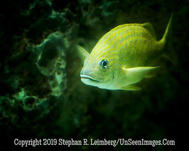 Yellow Tail - Copyright 2014 Steve Leimberg - UnSeenImages Com _H1R2716