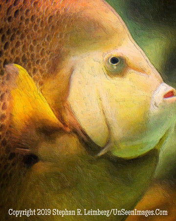 Pretty Fish II - Copyright 2014 Steve Leimberg - UnSeenImages Com _H1R2762