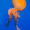 Jelly Walker - Copyright 2014 Steve Leimberg - UnSeenImages Com _H1R2028