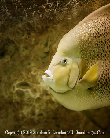 Beautiful Fish - Copyright 2014 Steve Leimberg - UnSeenImages Com _H1R2791