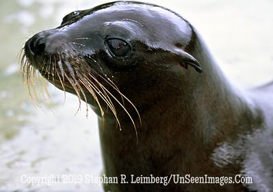 Seal JPG