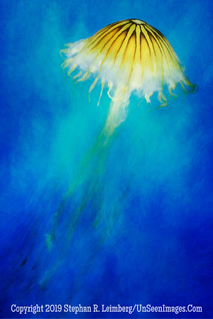 Jellyfish III - PAINTING a Copyright 2014 Steve Leimberg - UnSeenImages Com _H1R2227