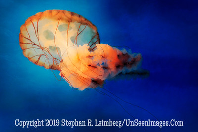 Jelly Dancer - Beautiful Dreamer PAINTING - Copyright 2014 Steve Leimberg - UnSeenImages Com _H1R2006