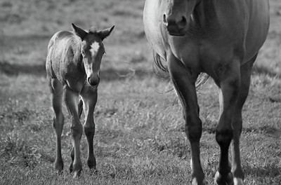 Mare and colt - in the pasture