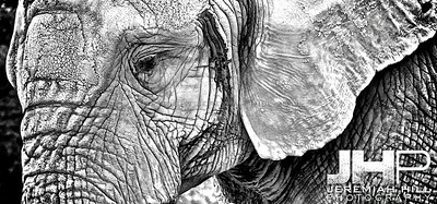 Elephants Of Toronto #9 Print ELT-461V3
