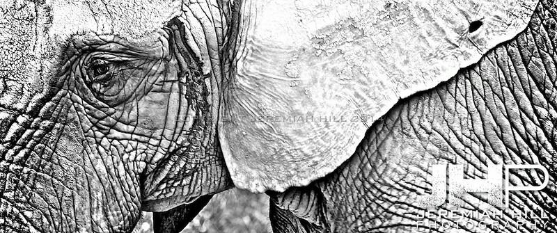 Elephants Of Toronto #12 Print ELT-474V2