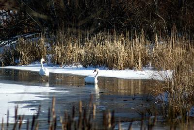 Ice birds...