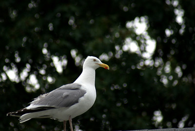 The overseer: A gull keeps an eye on things from the roof