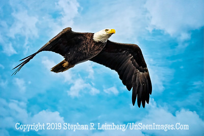 Up Up in the Sky  Copyright 2019 Steve Leimberg UnSeenImages Com _A6I4573