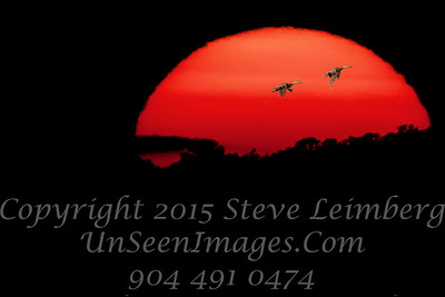 Sunset with Geese-  May 31 2016 Steve Leimberg - UnSeenImages Com _A6I7754