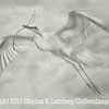 New Great Egret with Branch x B&W - Copyright 2015 Steve Leimberg - UnSeenImages Com _L8I9498