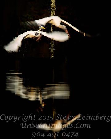 Overflight - Egret - Copyright 2015 Steve Leimberg - UnSeenImages Com _Z2A6590