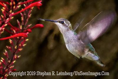 Humingbird 1 - Copyright 2014 Steve Leimberg - UnSeenImages Com _H1R3423