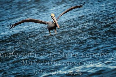 Pelican Landing - Copyright 2016 Steve Leimberg - UnSeenImages Com _M1A4709