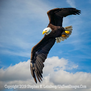 Hunting for Lunch  Copyright 2019 Steve Leimberg UnSeenImagesCom _A6I4996