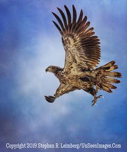 Screaming Eagle _H1R6705