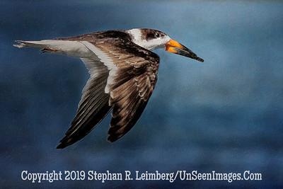 In Route - Steve Leimberg - UnSeenImages Com _H1R2445