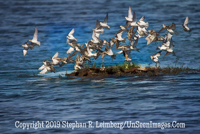 Birds in Flight - Steve Leimberg - UnSeenImages Com _H1R3092