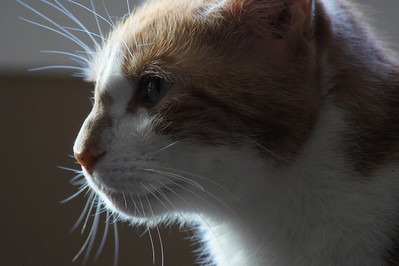 Kitty profile