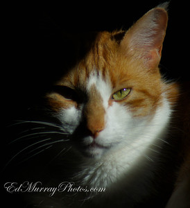 "Meow: Hey, I hope everyone had a good weekend, unfortunately. I think the family illness has finally caught up to me.... Here's a shot of my cat ""Rudy"" who apparently wasn't too please to wake up only to find a camera aimed at him"