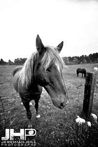 """Horse At the Fence #1"", Hillsdale, ON, Canada, 2011 Print JP12-104-073"