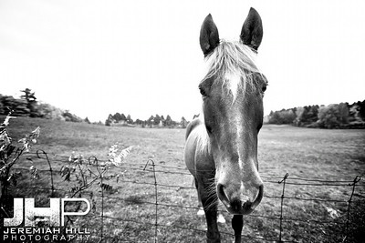 """Horse At the Fence #3"", Hillsdale, ON, Canada, 2011 Print JP12-104-077"