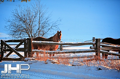 """Red At The Fence"", Hillsdale, ON, Canada, 2012  Print JP12-111-016"