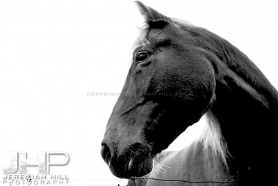 """Red in Black and White #1"", Hillsdale, ON, Canada, 2011 Print JP12-104-082"