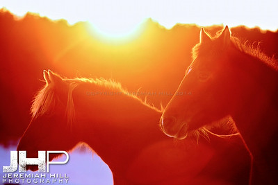 """Red and Lady by Sunset #2"", Hillsdale, ON, Canada, 2011  Print JP11-1210-118"