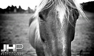 """Horse At the Fence #2"", Hillsdale, ON, Canada, 2011 Print JP12-104-076V2"