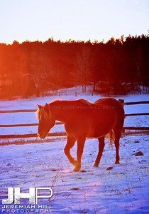 """Red in Blue"", Hillsdale, ON, Canada, 2011 Print JP11-1210-105V2"