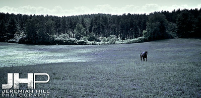 """Horse In Feild Covered by Cloud"", Hillsdale, ON, Canada, 2011 Print JP11-814-010"