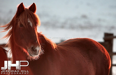 """Red In Winter"", Hillsdale, ON, Canada, 2011 Print JP11-1210-095"