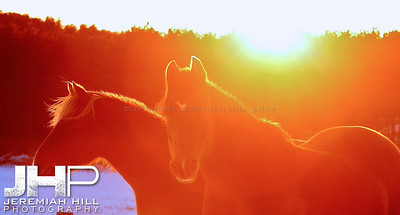 """""""Red and Lady by Sunset #4"""", Hillsdale, ON, Canada, 2011 Print JP11-1210-106V2"""