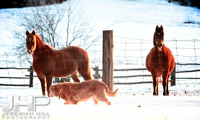 """Zoe and Her Friends"", Hillsdale, ON, Canada, 2011 Print JP11-1210-0812"