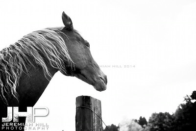 """Looking Out"", Hillsdale, ON, Canada, 2011 Print JP12-104-088"