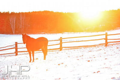 """Horse In Light #1"", Hillsdale, ON, Canada, 2011 Print JP11-1210-086"