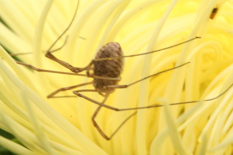 spider2593