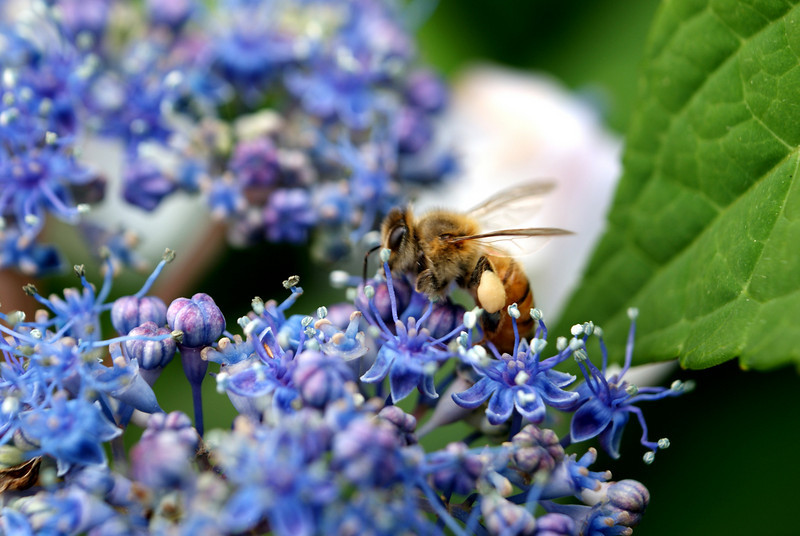 Busy Bee: Another attempt at catching a bee..