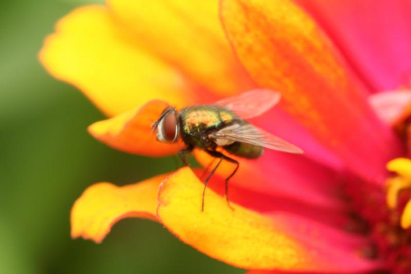 fly2696