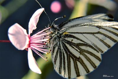 Moth of change