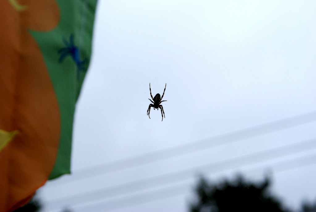 Arachni-flyer