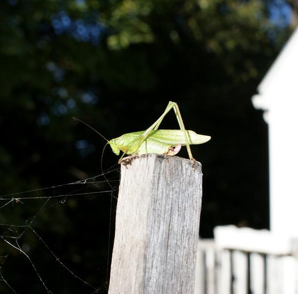 Stick Hopper