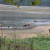 Elk <br /> Lone Elk Park <br /> St. Louis County