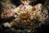 Anemone - Monterey Bay Aquarium #7319