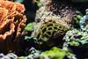Anemone - Monterey Bay Aquarium #7235
