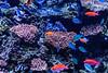 Fish - Monterey Bay Aquarium #7420