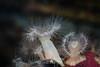 Anemone - Monterey Bay Aquarium #6993