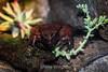 Frog - Monterey Bay Aquarium #2669
